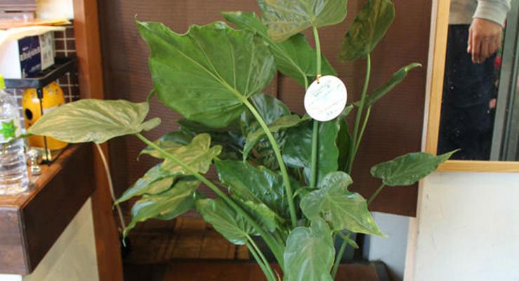 開店・開業祝いにおしゃれな観葉植物