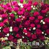 バースデーイベント in 神戸・三宮!生花装飾&生花アーチ!